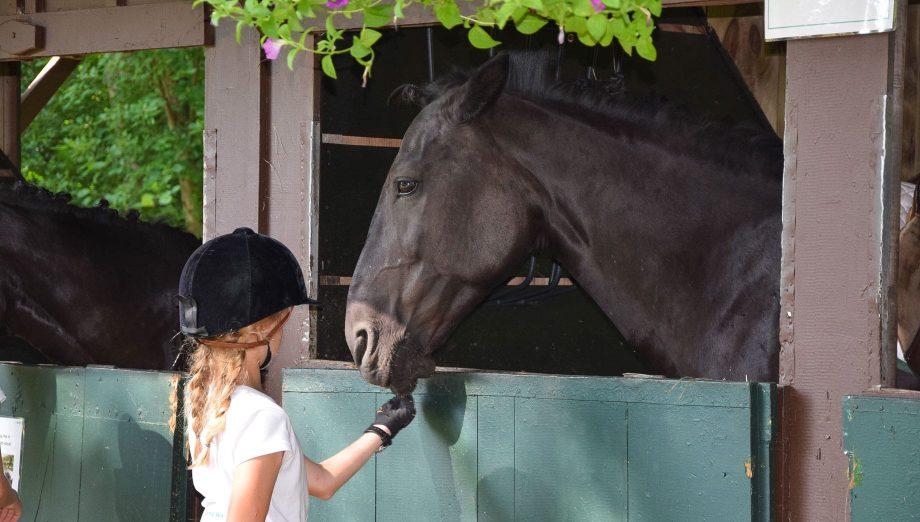 Camper petting a horse